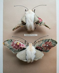 Mister Finch Flower-moth-furry-