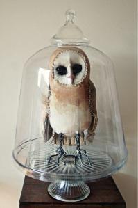 Mister Finch Owl