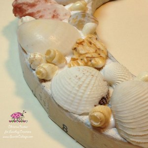 Scarlet Calliope Sea Shells C 7