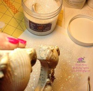 Scarlet Calliope Sea Shells C 8