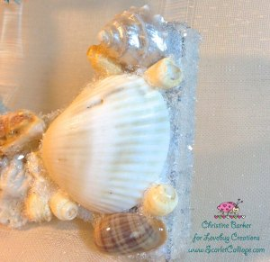 Scarlet Calliope Sea Shells C 9