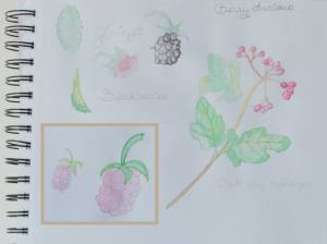 SCarletCalliope Berry Sketches by Christine Barker